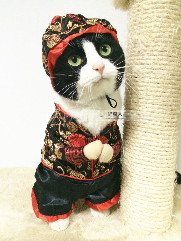 a6eac0a917f4808fc12d620bd58dcbf7--funny-chinese-cat-dresses.jpg