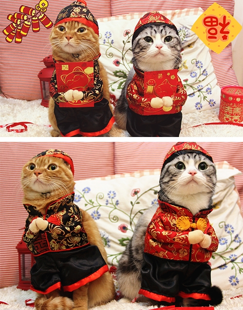 Cat-CNY-Costume-500x638.jpg